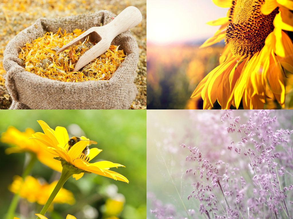 Økologisk eller sertifisert økologisk – er det noen forskjell?